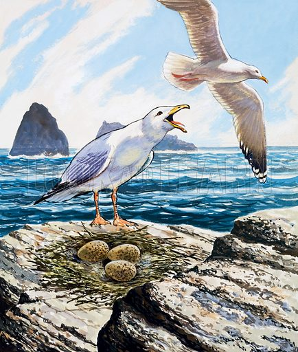 Seagulls Nest. Original artwork for Once Upon a Time. Lent for scanning by the Illustration Art Gallery.