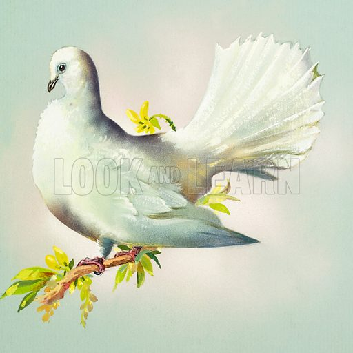 Fantail Dove (Great Britain). Original artwork for illustrations on pp 4–5 of Once Upon a Time issue no 113.