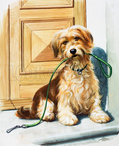Dog holding lead in its mouth.