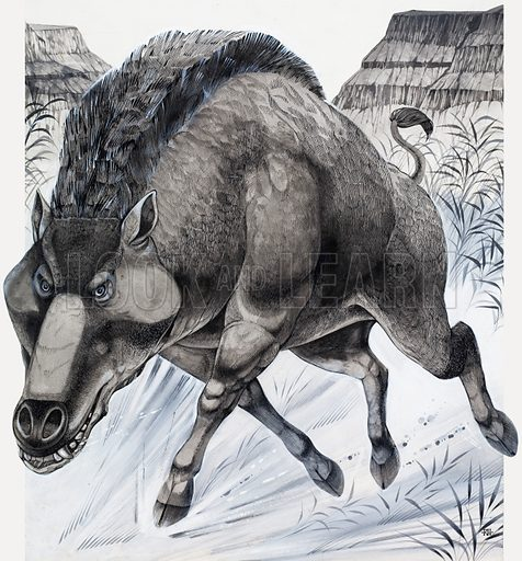 Daeodon, ancestor of the European wild boar.  Original artwork for illustration (reversed) on p82 of the Look and Learn Book 1979.  Lent for scanning by the Illustration Art Gallery.