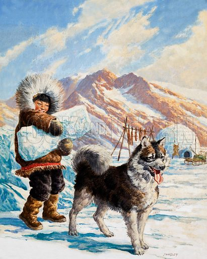 Arctic dog with a young Eskimo who is carrying a block of ice towards an igloo.  Original artwork for cover of Treasure issue no 92.  Lent for scanning by the Illustration Art Gallery.