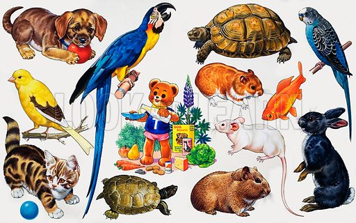 Animal montage. From Teddy Bear Annual 1976. Original artwork loaned for scanning by the Illustration Art Gallery.