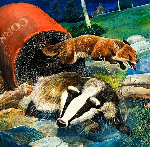 Badger and fox (illustration, picture, art, artwork: G W Backhouse)