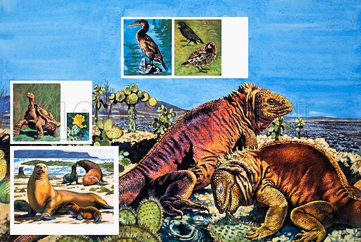 Nature's Kingdom: Wildlife Wonderlands. From Look and Learn no. 984 (17 January 1981). Original artwork loaned for scanning by the Illustration Art Gallery.