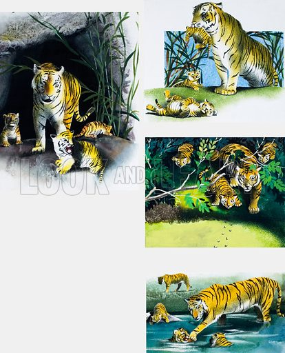 Tiger and cubs. From Playhour Annual 1980.