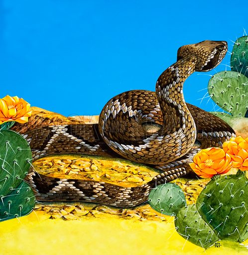 Rattlesnake, picture, image, illustration