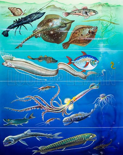 Underwater creatures montage. Source unknown. Original artwork loaned for scanning by the Illustration Art Gallery.
