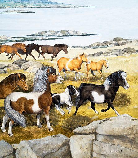Shetland ponies.  Original artwork for Treasure annual 1970.  Lent for scanning by the Illustration Art Gallery.