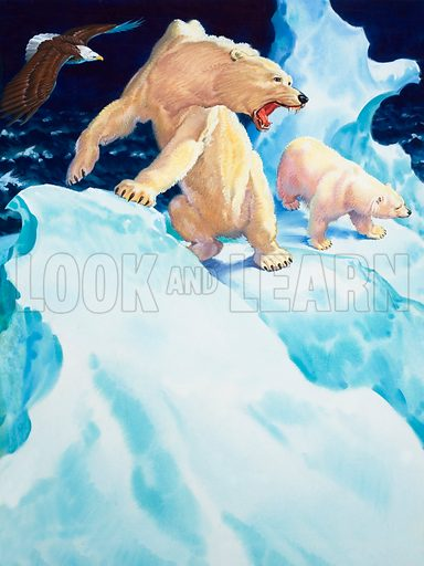 Polar bears and golden eagle.  Lent for scanning by the Illustration Art Gallery.