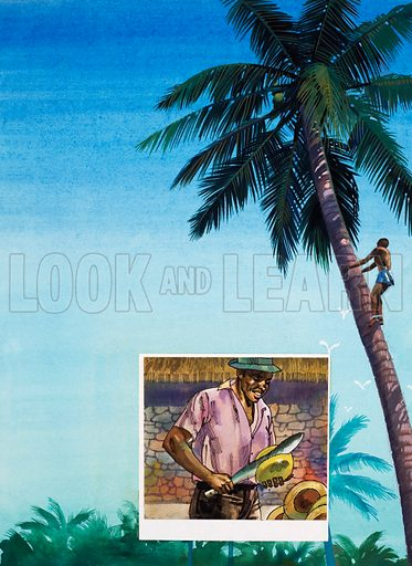 Coconut palm tree, picture, image, illustration