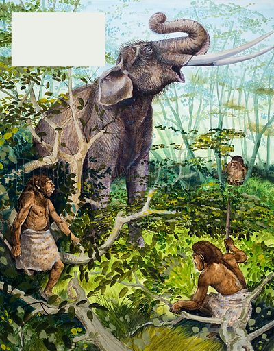 Stone Age Man and Elephant. From Treasure (?) (artwork dated 7/1/67). Original artwork loaned for scanning by the Illustration Art Gallery.