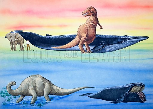 How Big Were the Dinosaurs?. From Look and Learn (date unknown). Original artwork loaned for scanning by the Illustration Art Gallery.