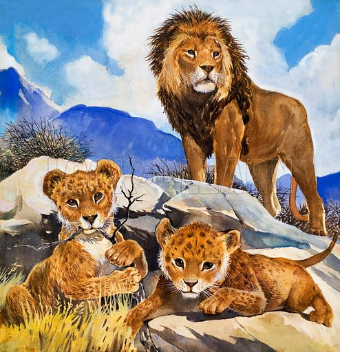 Focus on Baby Animals: Mother's Gone a-Hunting. Original artwork for illustration on p17 of Look and Learn issue no 85. Also used in one of the Treasure books of animals.