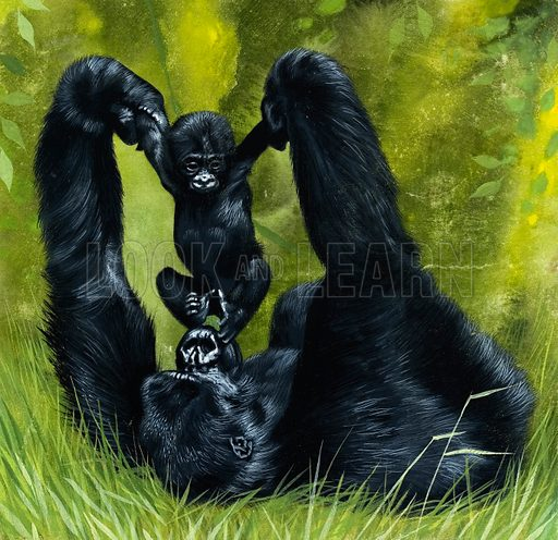 Gorilla playing with baby