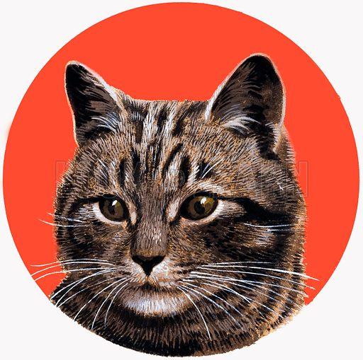 Tabby cat.  Original artwork for illustration on cover of Treasure issue no 192 (17 September 1966).  Lent for scanning by the Illustration Art Gallery.
