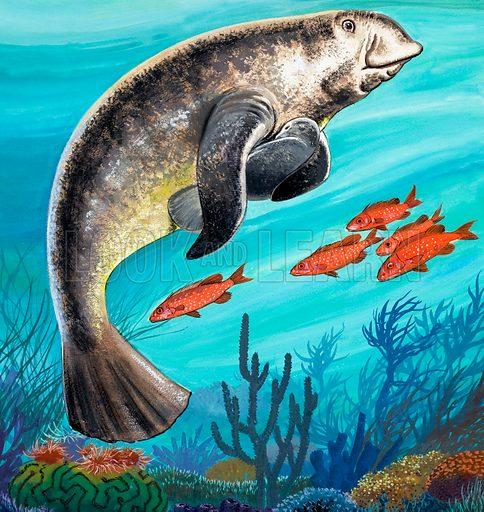 Undersea Creatures.