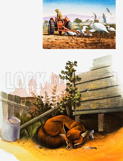 Sleeping fox. Inset: Ploughing a field. Original artwork for Look and Learn.