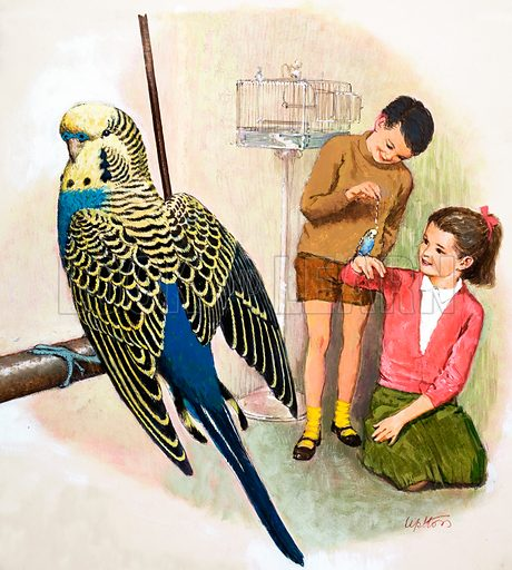 B is for Budgerigars. From cover for Treasure no. 81. Original artwork loaned for scanning by the Illustration Art Gallery.