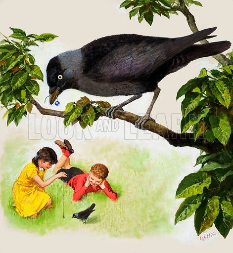 Jackdaw. Jackdaw shows a boy and girl teasing one bird with a silver bead while the other perches on a branch overhead, string and bead in its beak. Original artwork for cover of Treasure issue no 97 (16 November 1963).