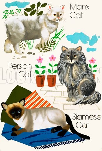 Domestic cats. Original artwork loaned for scanning by the Illustration Art Gallery.