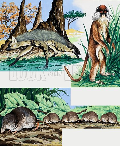 Wild animals montage. From Once Upon a Time 163. Original artwork loaned for scanning by the Illustration Art Gallery.