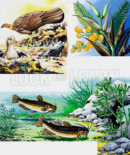 Wild animals montage. From Once Upon a Time 141. Original artwork loaned for scanning by the Illustration Art Gallery.