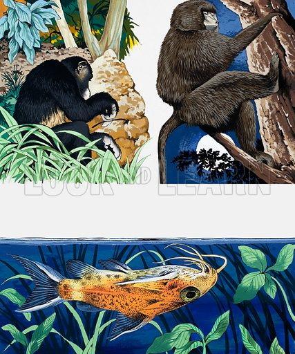 Wild animals montage. From Once Upon a Time 153. Original artwork loaned for scanning by the Illustration Art Gallery.