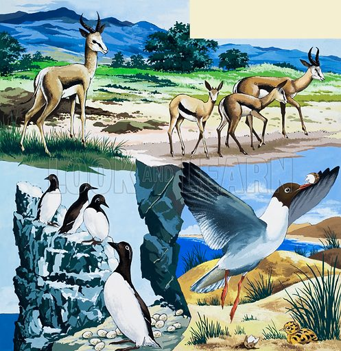 Wild animals montage. From Once Upon a Time 177. Original artwork loaned for scanning by the Illustration Art Gallery.