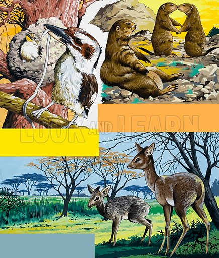 Wild animals montage. From Once Upon a Time 171. Original artwork loaned for scanning by the Illustration Art Gallery.