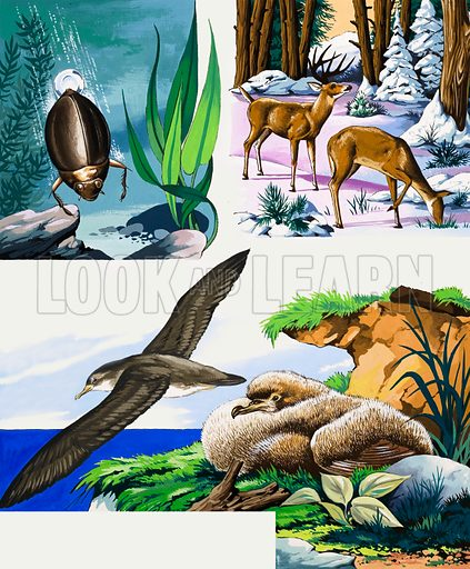 Wildlife montage. From Once Upon a Time 132. Original artwork loaned for scanning by the Illustration Art Gallery.