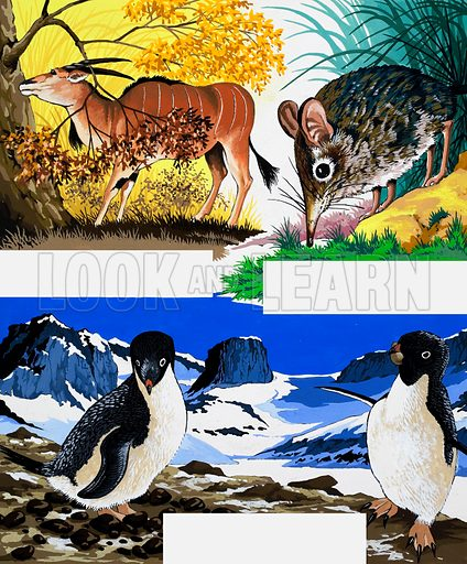 Wildlife montage. From Once Upon a Time 168. Original artwork loaned for scanning by the Illustration Art Gallery.