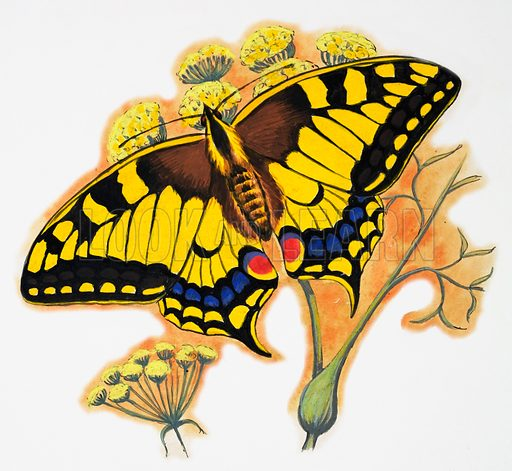 Butterfly. Original artwork loaned for scanning by the Illustration Art Gallery.