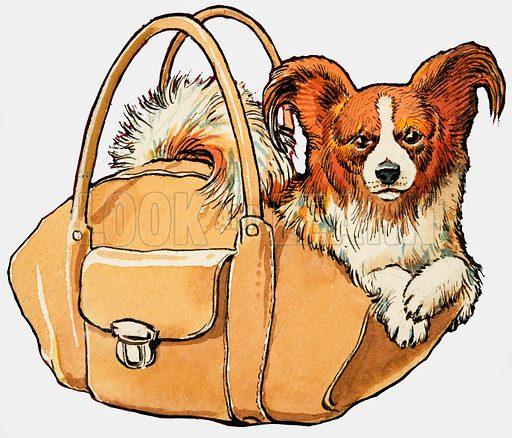 Dog in a handbag.