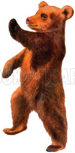Dancing Bear.