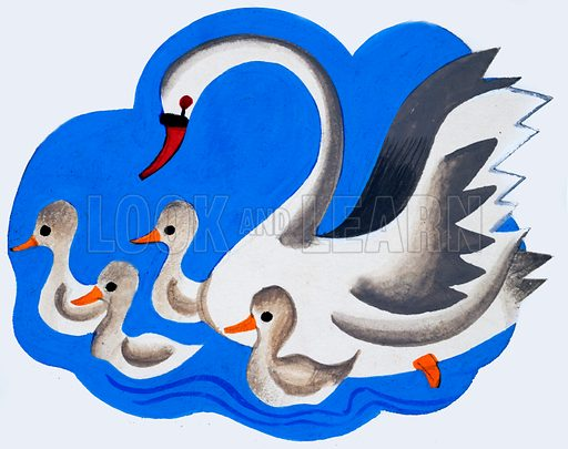 Swan and cygnets. Original artwork loaned for scanning by the Illustration Art Gallery.