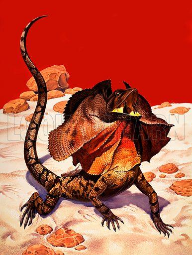 Frilled lizard.