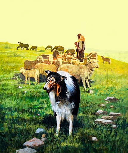 The Sheepdog. Cover illustration from Once Upon a Time no. 22 (12 July 1969).