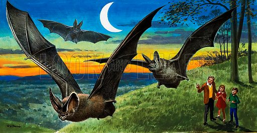 Bats, picture, image, illustration
