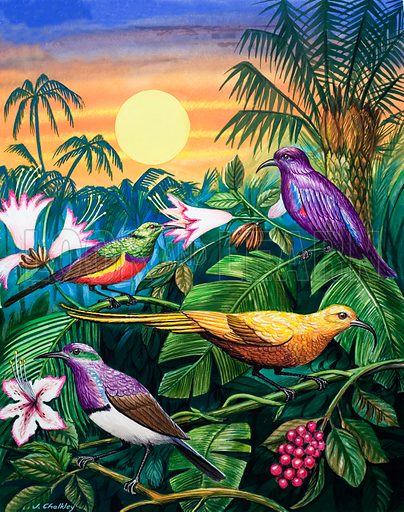 Tropical Sunbirds. From Once Upon a Time no. 138.