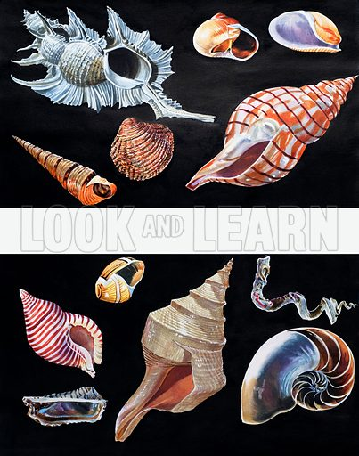 All Sorts of Sea Shells. From Once Upon a Time no. 78.