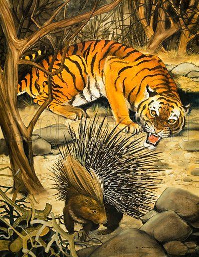Tiger and porcupine. From Treasure no. 225 (6 May 1967).