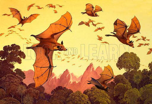Flying foxes. Original artwork loaned for scanning by the Illustration Art Gallery.