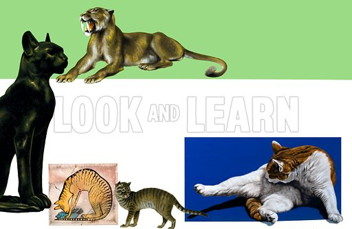 Unidentified cats through the ages montage, from sabre-toothed prehistoric creature to domestic moggy.
