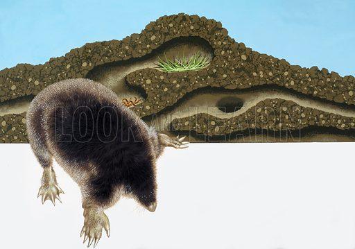 Mole and mole hill.