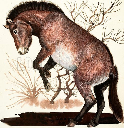 Mongolian Wild Horse. Original artwork loaned for scanning by the Illustration Art Gallery.