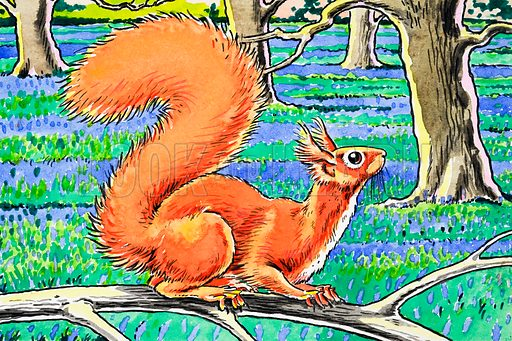Little Red Squirrel. From Playhour (date unknown).