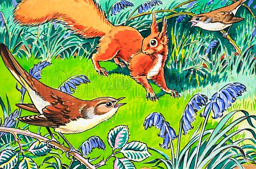 Little Red Squirrel. From Playhour (date unknown). Original artwork loaned for scanning by the Illustration Art Gallery.