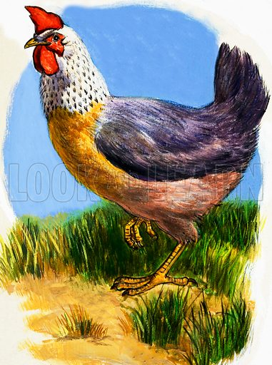 Hen. Original artwork (dated 14/1/67) loaned for scanning by the Illustration Art Gallery.