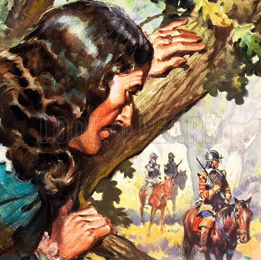 King Charles II in the oak tree (illustration, picture, art: James E McConnell)