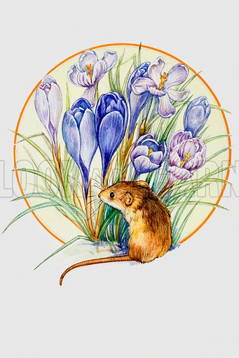 Harvest Mouse and Crocus. Original artwork loaned for scanning by the Illustration Art Gallery.